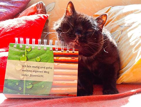 Damit die Welt ein besserer Platz wird – die Rede der weisen Katze Purzel