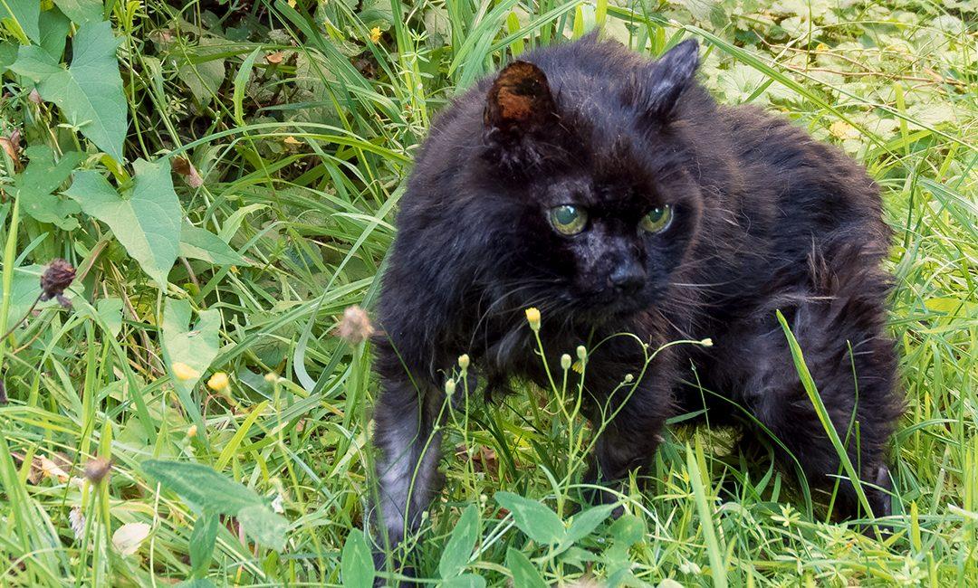 """""""Vergiss nicht, morgen früh wieder aufzuwachen"""" – Das Leben mit einer uralten Katze"""