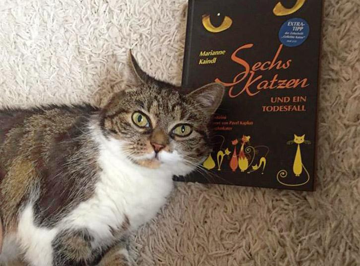 Tolle Rezension einer lesenden Katze – am Anfang stand der Leckerli-Schwund