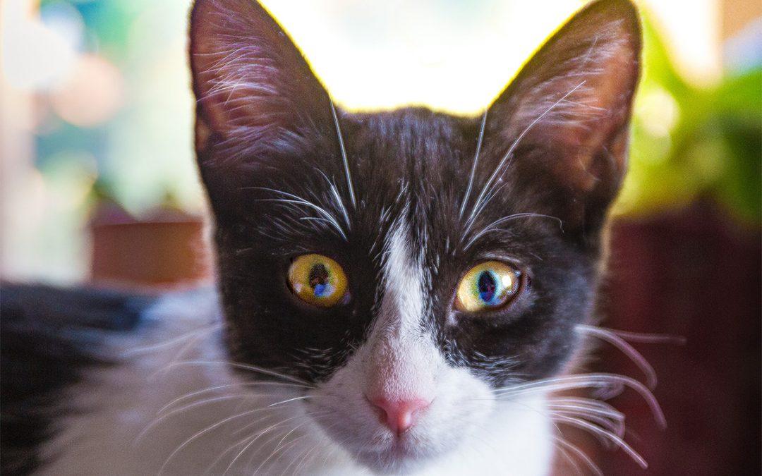 Heiße Tipps fürs Zusammenleben mit dem faszinierenden Wesen Katze