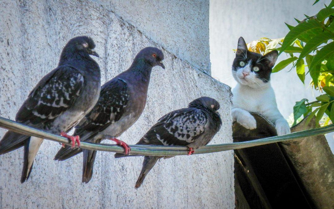 Wir Killer – Rosita berichtet von der Katzen-Tagung ANIMALICUM