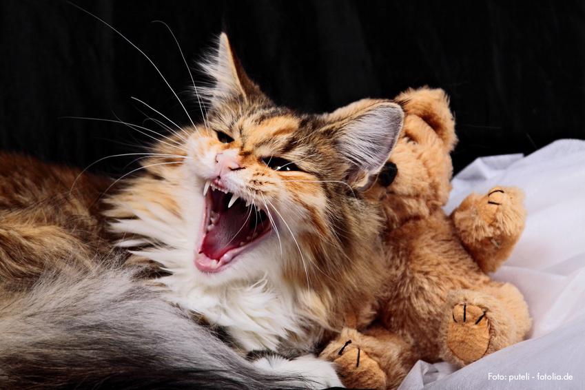 Liebe für ein ganzes Katzenleben