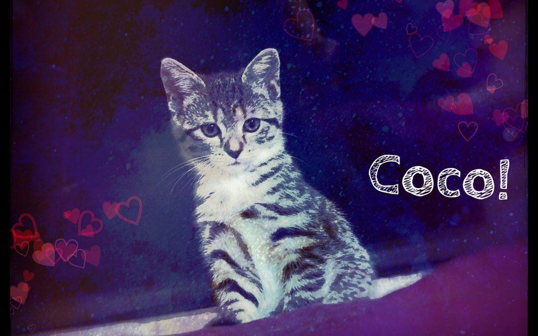 """Erstes Interview mit Krimi-Katze Coco zum neuen Katzen-Krimi """"Nazi-Allergie"""""""