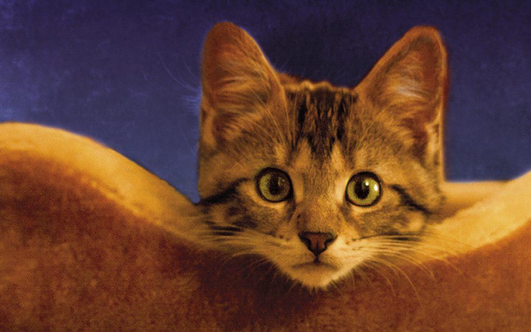 Coco auf dem Weg zur Bestseller-Katze