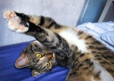 Guten Morgen, Krimi-Katze Coco!