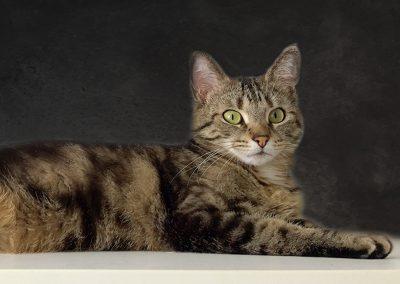 Krimi-Katze Coco