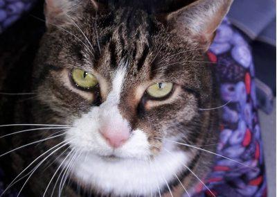 Katze Krümi von Gabi-Elisabeth